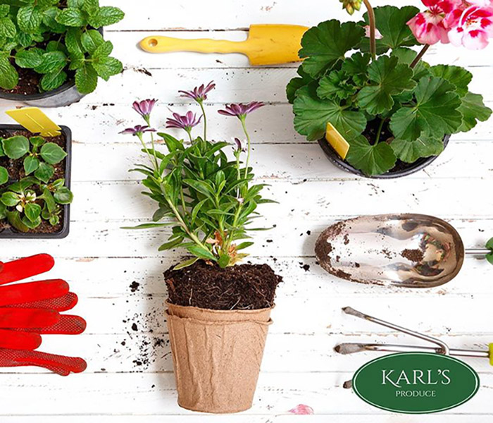 Karl's Produce Greenhouse Flowers